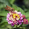 Moth by Deborah Hughes
