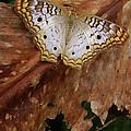 Moth by Mark Holbrook