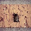 Moth On Brick by Jessica Wakefield