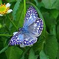 Moth by Paul Wilford