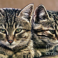 Mother And Child Wild Cats by Stelios Kleanthous