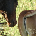Mother And Foal by Bobbylee Farrier