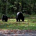 Mother Bear And Cub by Kathy Long