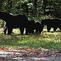 Mother Bear And Three Cubs by Kathy Long
