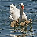 Mother Goose Plus 5 by Kenny Bosak