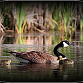 Mother Goose by Travis Truelove