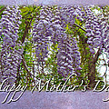 Mother's Day Card - Purple Wisteria by Mother Nature
