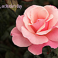 Mothers Day Pink Rose by Sarah Broadmeadow-Thomas