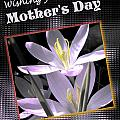 Mothers Day Wish by Susan Kinney