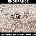 Motivational Endurance Of Little Turtle Take Baby Steps Towards Ultimate Success by John Shiron