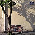 Motorcycle And Tree. Belgrade. Serbia by Juan Carlos Ferro Duque