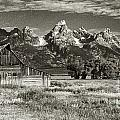 Moulton Barn And The Grand Tetons by Sandra Bronstein
