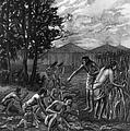 Mound Builders: Farming by Granger