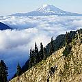 Mount Adams Above Cloud-filled Valley by Dan Sherwood