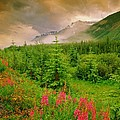 Mount Amery And Fireweed by Darwin Wiggett