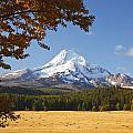 Mount Hood And Autumn Colours In Hood by Craig Tuttle