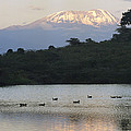 Mount Kilimanjaro Rises Above One by Richard Nowitz