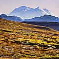 Mount Mckinley, Denali National Park by Yves Marcoux