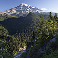 Mount Rainier Surrounded By Forest by Konrad Wothe