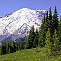 Mount Rainier X by David Patterson