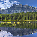 Mount Rundle And Boreal Forest  by Tim Fitzharris