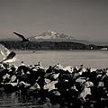 Mount Washington View From White Rock Bc by Diane Dugas