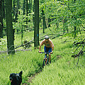 Mountain Biker And Dog On Single Track by Skip Brown