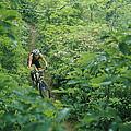 Mountain Biker On Single Track Trail by Skip Brown