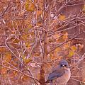 Mountain Bluebird by Brandi Christon