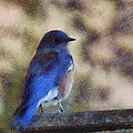 Mountain Bluebird Painterly by Ernie Echols