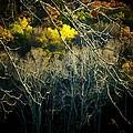Mountain Branch by Michael L Kimble
