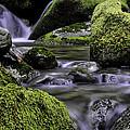 Mountain Creek by Jill Bingham-Daniels