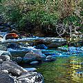 Mountain Creek by Robert Bales