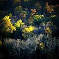 Mountain Foilage by Michael L Kimble