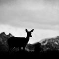 Mountain Overlook by Steve McKinzie