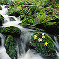 Mountain Stream Cascading by Norbert Rosing