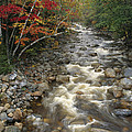 Mountain Stream In Autumn, White by Medford Taylor