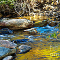 Mountain Stream by Robert Bales