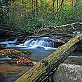 Mountain Stream by Thomas Pickens