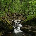 Mountain Stream by Torsten Dietrich