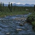 Mountain Stream With Cabin In Evergreen by Rich Reid