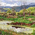 Mountain Valley Marsh - Hdr by Gary Whitton