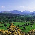 Mourne Mountains, Co Down, Ireland by The Irish Image Collection