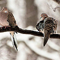 Mourning Doves by Marie Fortin