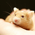 Mouse by Masha Batkova
