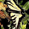 Moveonart Yellowbutterflyfriend by Jacob Kanduch