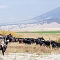 Moving The Herd by Fran Riley