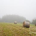 Mown Grass by Michal Boubin