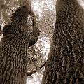 Mr And Mrs Oak Land by Edward Smith