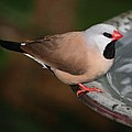 Mr. Red Beak by Andrea  OConnell